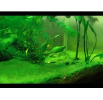 How do I get rid of the algae in my aquarium tank?