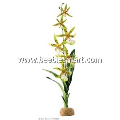 .Exo Terra Rainforest Plant - Spider Orchid