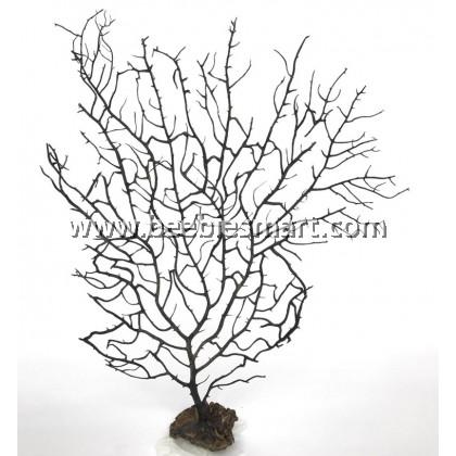 All Natural Black Sea Fan Coral