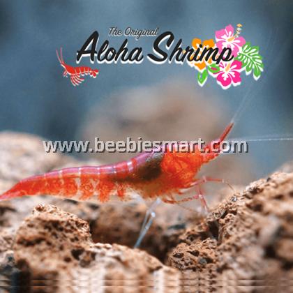 The Original ALOHA SHRIMP - Aloha Shrimp 1pc