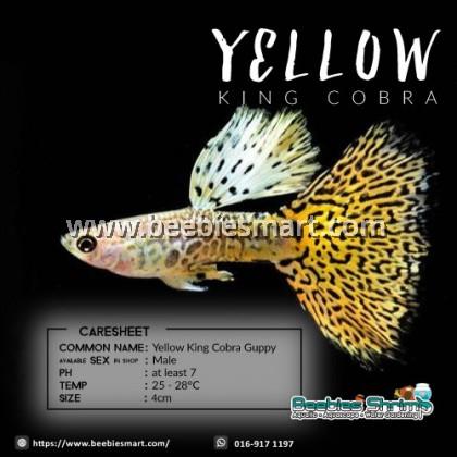 Yellow King Cobra Guppy