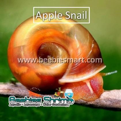 Ramshron Snail