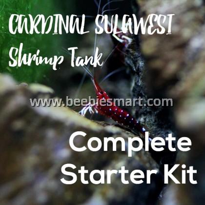 Premium Tank for Cardinal Sulawesi Shrimp Complete Starter Kit