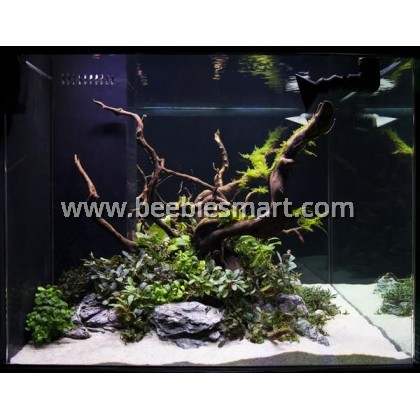 Aquascape Driftwood Spiderwood