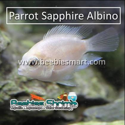 Parrot Sapphire Albino